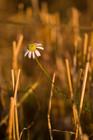 The last flowers, part 3