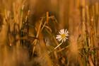 The last flowers, part 1